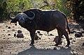 Kruger National Park, South Africa (36478905680).jpg