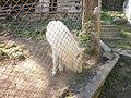 Kyustendil Zoo 18.JPG