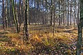 LSG Forst Rundshorn IMG 2306.jpg