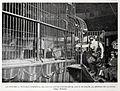 La Condesa X, notable domadora de leones que se exhibe en el Circo de Colón, al entrar en la jaula, de Franzen, Blanco y Negro, 15-07-1900.jpg