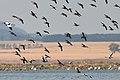 Lake Burrumbeet (24665565112).jpg