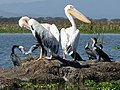 Lake Naivasha National Park. Кения - panoramio.jpg