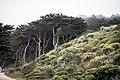 Land's End, San Francisco (35450955471).jpg