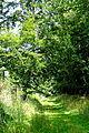 Landschaftsschutzgebiet Turmberggebiet bei Wesseln - Waldweg 5.jpg