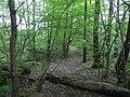 Langenfeld Nähe Haus Graven 0022.jpg