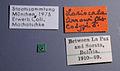 Lasiocala arrowi paratype 1 label.jpg