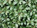 Leaves-4137.jpg