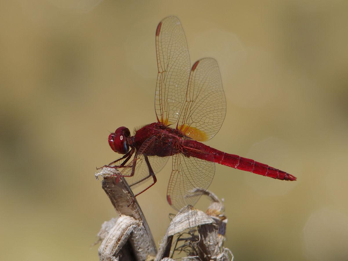 Dragonfly essay writing