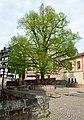Linde Kornmarkt Marburg.jpg