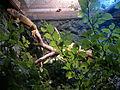Lizard (7822195980).jpg