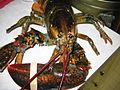 Lobster 01.jpg