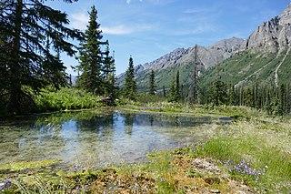Ogilvie–MacKenzie alpine tundra