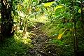 Lyon Arboretum - Aihualama Trail (8331416938).jpg