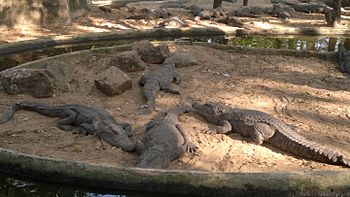 Madras crocodile bank trust (2).jpg