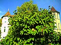 Magnolia kobus fruits - October 2013 - Master Botany Photography - Botanischer Garten Freiburg - panoramio.jpg