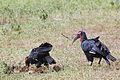 Manyara 2012 05 29 2214 (7482063490).jpg