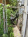 Marigny Fence Sears.jpg