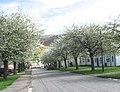 Market Street, Ullapool - geograph.org.uk - 1107819.jpg