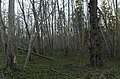 Mežs, 13.04.2019. - 49365509893.jpg
