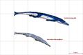 Metriorhynchidae.PNG