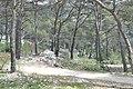 Mont Faron, Toulon, Provence-Alpes-Côte d'Azur, France - panoramio.jpg
