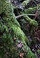Moss, Forest Floor, Vermont.jpg