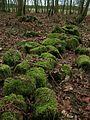 Mossy logs - geograph.org.uk - 109919.jpg