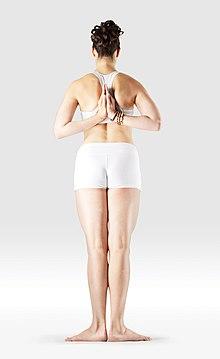 220px Mr yoga  mountain pose reverse prayer yoga asanas Liste des exercices et position à pratiquer