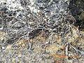 Mt Makalu area, Nepal 16.jpg