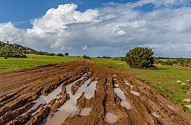 Muddy road in Akamas Peninsula, Cyprus 02.jpg