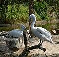 Muenster-100720-15820-Zoo.jpg