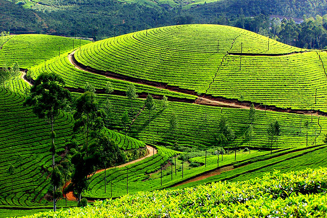 Munnar - The Hill Station in Kerala, Best travel destinations in India