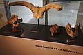 Musée-forum de l'Aurignacien - Collection - Herbivores et carnivores - 01 - 2016-05-22.jpg