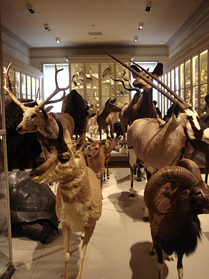 Muséum d'Histoire naturelle de La Rochelle - A room in the museum.