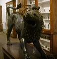 Museo archeologico di Firenze, La chimera d'arezzo 02.JPG