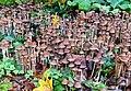 Mushrooms, the Hermitage, Edinburgh - geograph.org.uk - 574522.jpg