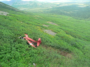 2010 Alaska Turbo Otter crash - The de Havilland Canada DHC-3T Turbine Otter following the crash