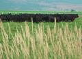 NRCSOR00072 - Oregon (5833)(NRCS Photo Gallery).tif