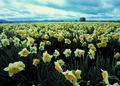 NRCSOR02019 - Oregon (5887)(NRCS Photo Gallery).tif