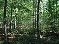 NSG 1633039, Erlebach bei Ehlen, 2, Habichtswald, Landkreis Kassel.jpg