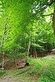 NSG Steinbruch Holzmühle (157).jpg
