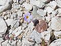 NTS - Wild Flowers 004.jpg
