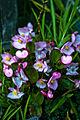 NZ Flowers -0680 (7769563598).jpg