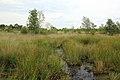 Nationaal park De Groote Peel 13.jpg