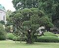 National Tokyo Museum-Ueno-Tokyo entrance garden.jpg