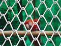 National Zoological Park, Delhi 3.jpg