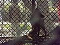 National Zoological Park Delhi 149.jpg