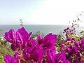 Nature for blinds 15.jpg