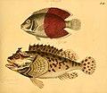 Naturgeschichte in Bildern mit erläuterndem Text (Taf. XLII) (6058663225).jpg