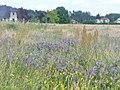 Naturpark Nuthe-Nieplitz - Feldrand (Nuthe-Nieplitz Nature Reserve - Field Edge) - geo.hlipp.de - 39263.jpg
